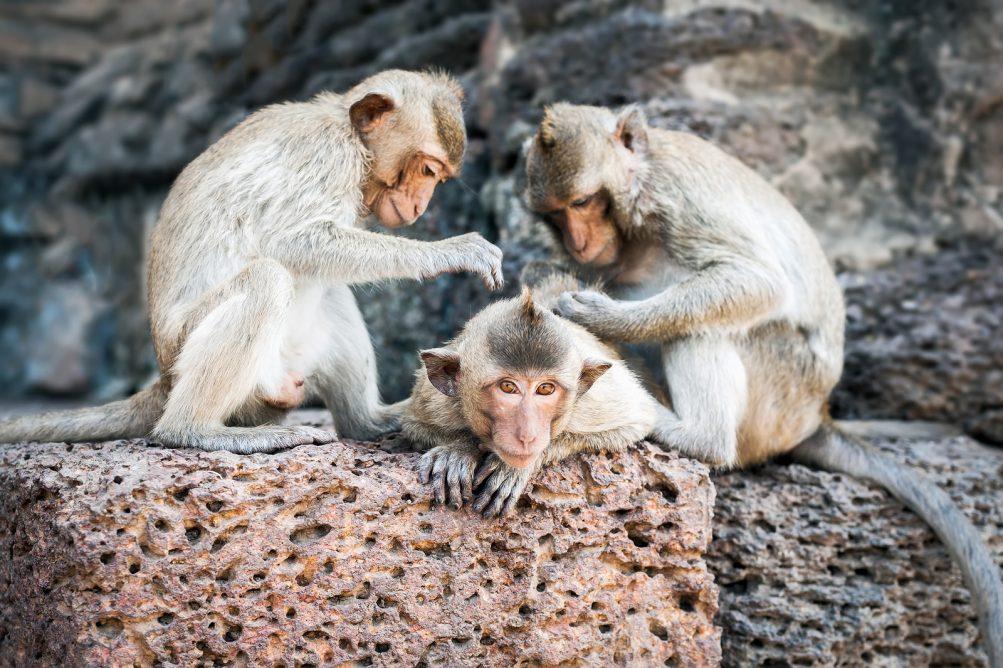 Flossing Monkeys
